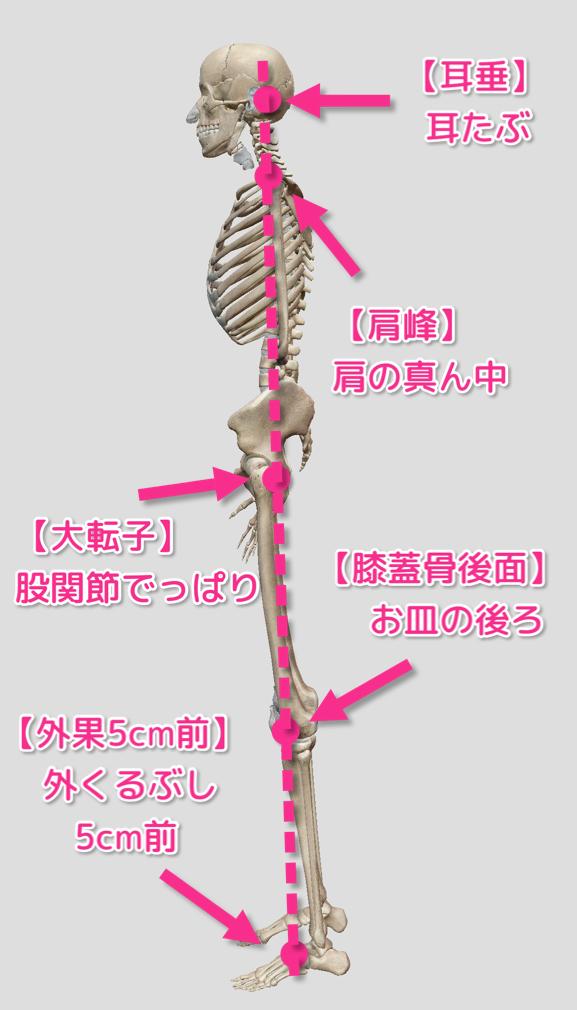 身体の前後方向のバランスの図