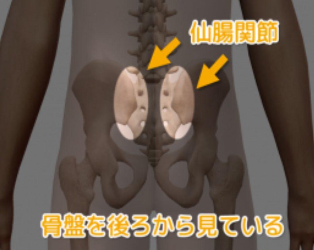 仙腸関節がどこにあるのか示した図