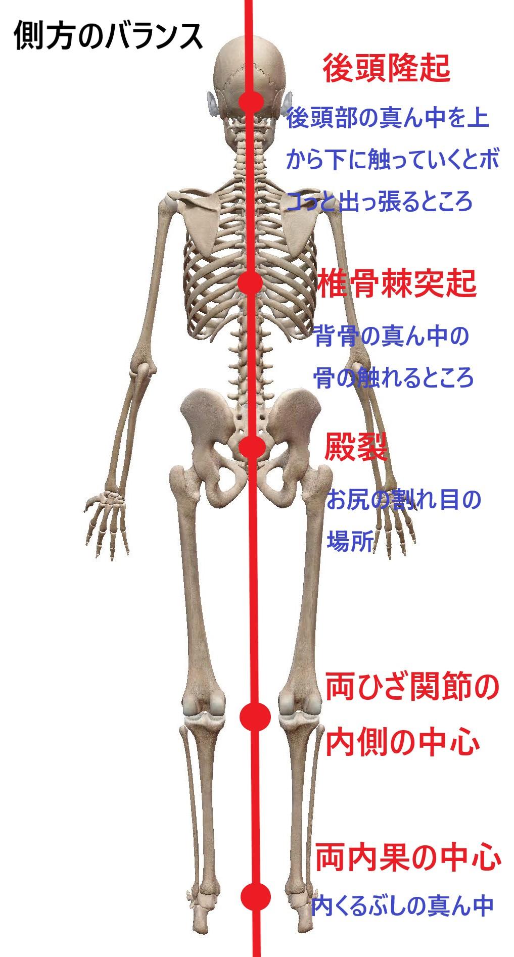 身体の側方バランスの図