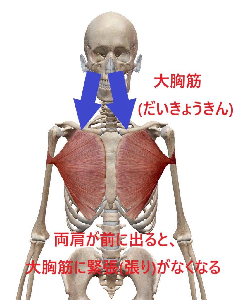 胸が垂れる原因である大胸筋(だいきょうきん)の図