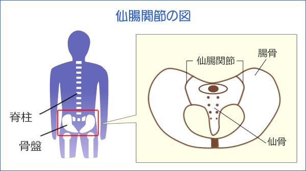 仙腸関節の図