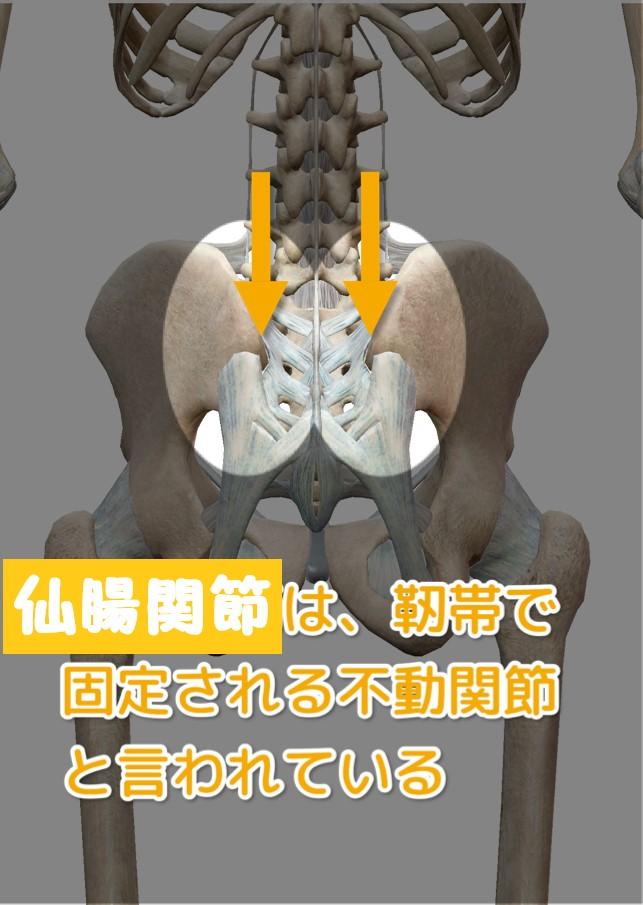 仙腸関節は靭帯で固定され不動関節であることを示した画像
