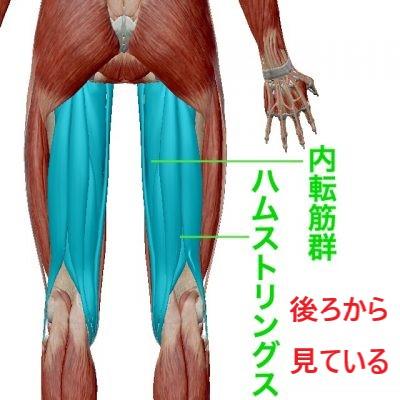 脊柱管狭窄症で鍛えなければならない内転筋群とハムストリングス筋の図